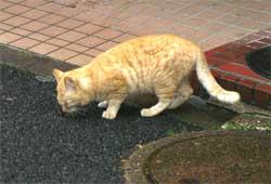 Cat06051601_1